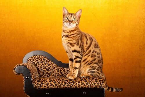 Gatto sopra una poltrona con motivo leopardato.