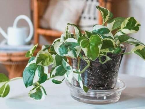Lezione di botanica: le piante migliori per decorare la casa