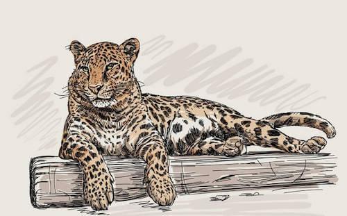 Vinile con figura di leopardo.