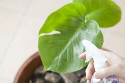 Prodotto antiparassitario spruzzato su una foglia per salvaguardare la salute della pianta.