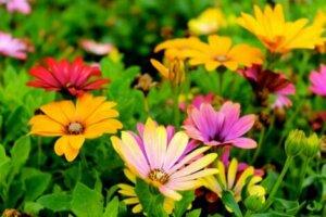 Prato fiorito in estate.