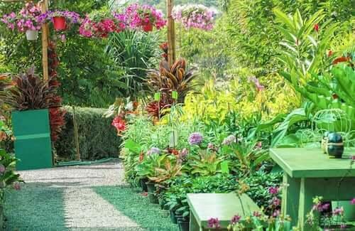 Giardino con piante fiorite.