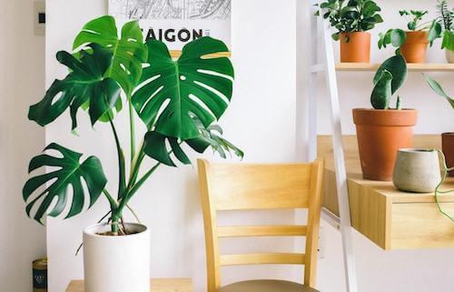Angolo di una stanza decorato con le piante.