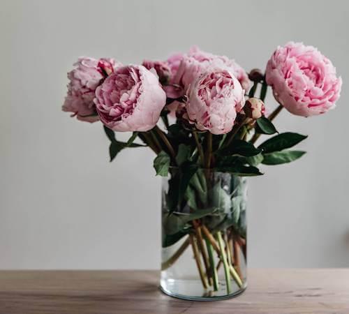 Fiori di peonia dentro un vaso di vetro. Piante e fiori colorati.