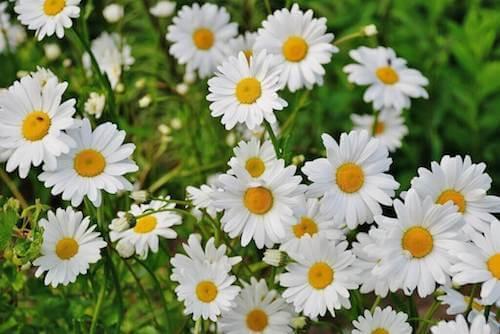 Il significato dei fiori più conosciuti: sapete qual è?