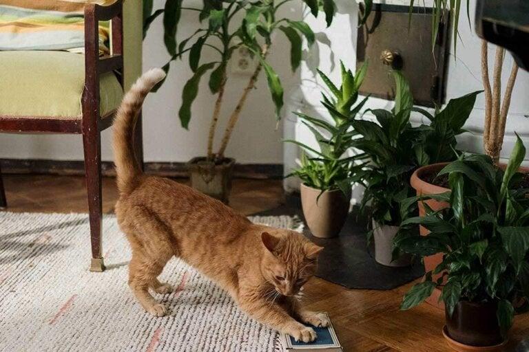 10 piante da appartamento pet friendly