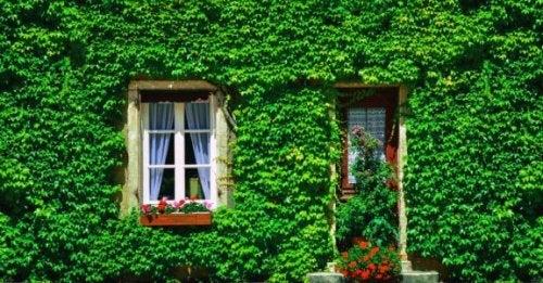 庭の目隠しアイデア:屋外にアイビーを植えてみよう