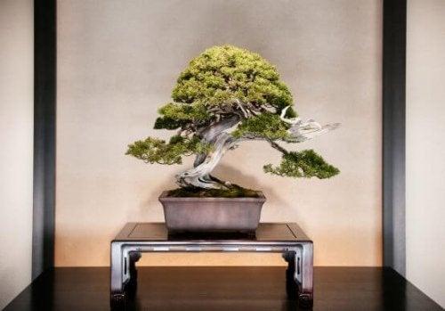 盆栽の飾り方とお手入れ方法
