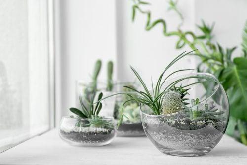 玄関 観葉植物 アイデア