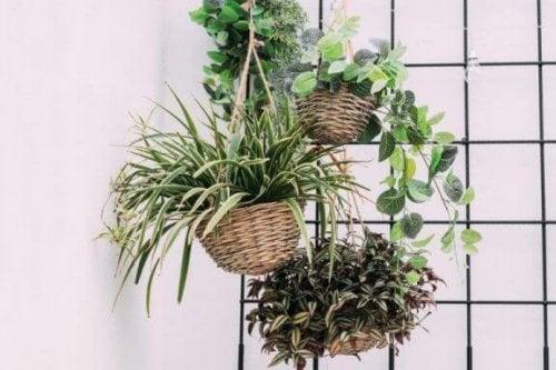 壁に吊り下げた観葉植物 ウォールガーデン お手入れ 方法