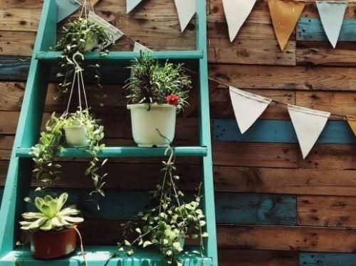 「はしご」を活用して植物棚を作ってみませんか?