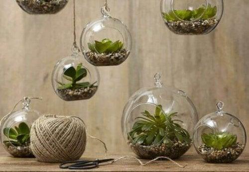 ガラスの植木鉢