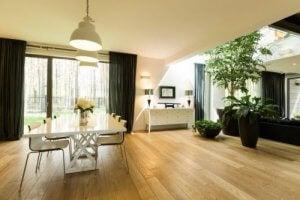 室内植物を正しく選ぶ方法 背の高い植物
