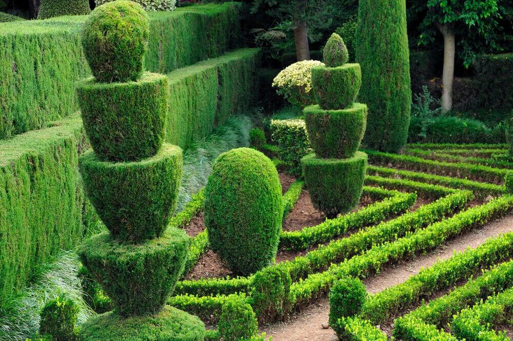 庭を魅力的にする5つのアイディア!トリミング