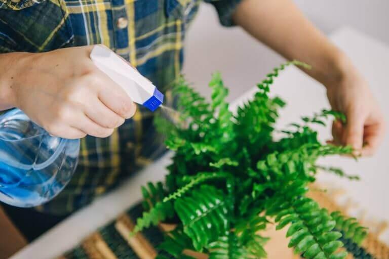 シダ植物の育て方