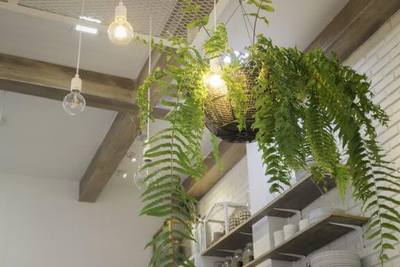 シダ植物をインテリアに活用する方法