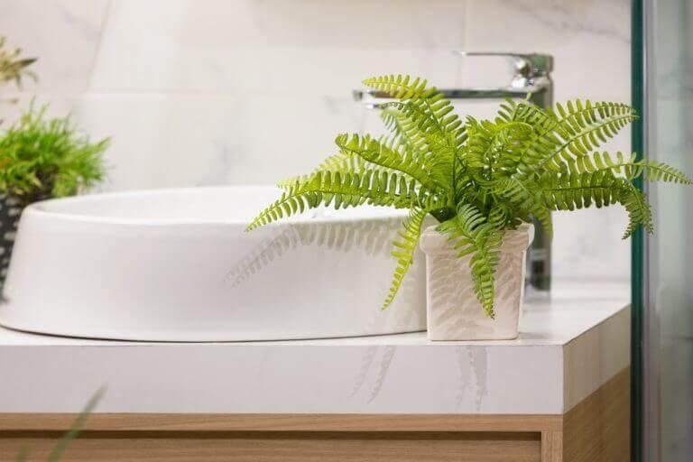シダ植物:新しく刺激的なインテリアのトレンド 浴室