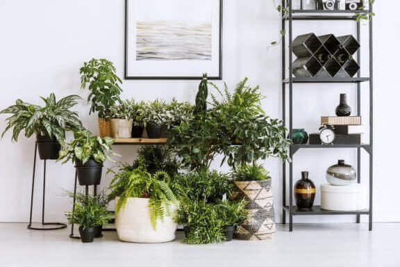 植物と風水:どのような効果がありますか?