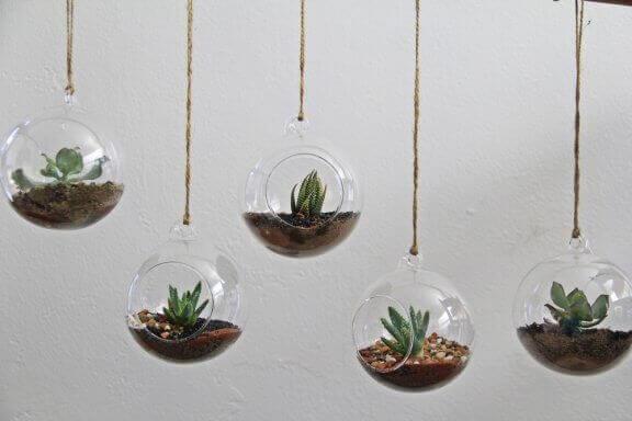 サトイモ科の水草とピレア・カディエレイ:テラリウムに合う2つの植物