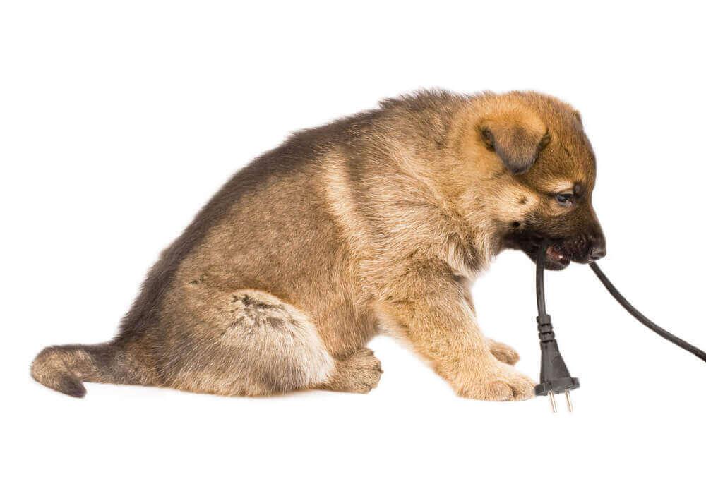 ペットのいる家庭の事故対策