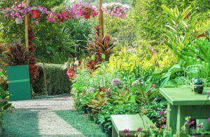 庭 植物につく害虫や病気を予防する方法