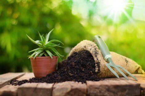 植物 お世話 施肥