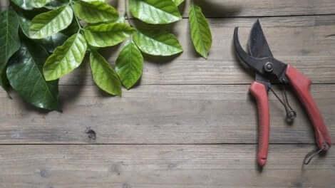 剪定 植物を美しく保つための基本的な世話の仕方
