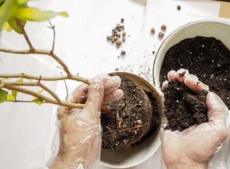 植え替え 植物を美しく保つための基本的な世話の仕方
