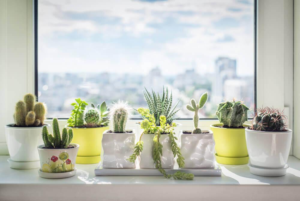 サボテン 植物