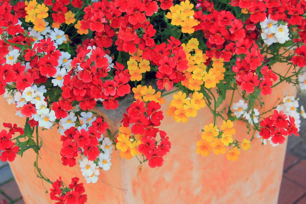 色鮮やかな花 イタリア式VSフランス式の庭
