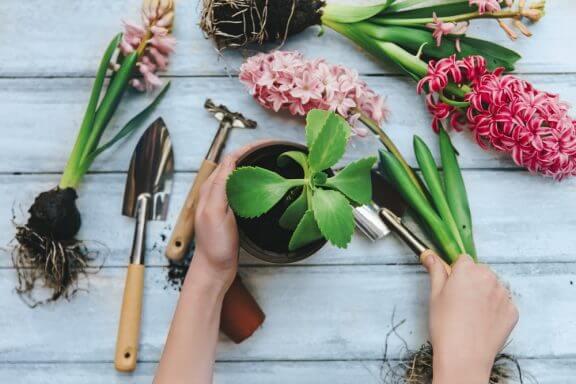 알고 있어야 할 8가지 실내용 식물