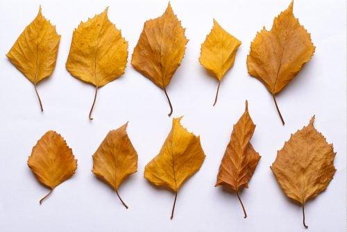말린 잎으로 작품을 만들기 위해 먼저 잎들을 잘 말려야 한다.