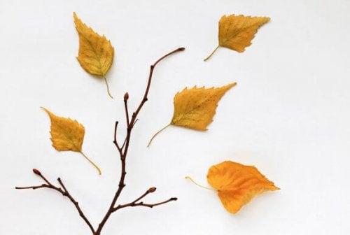 말린 잎으로 인테리어 소품을 만드는 2가지 방법