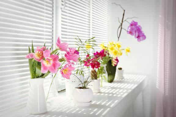 당신의 집을 위한 꽃 피는 실내 화초 4가지