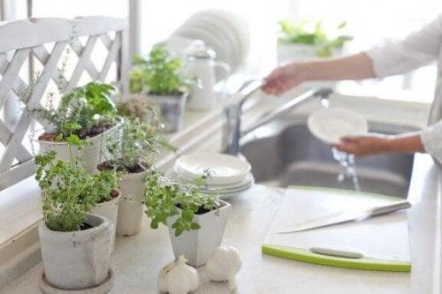 식물로 부엌을 장식하는 8가지 아이디어