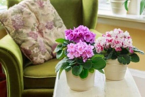 가을 정원을 꾸미기 좋은 식물 3가지