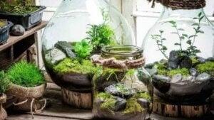유리병 속 작은 정원: 어떻게 만들 수 있을까?