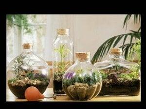 '유리병 속 작은 정원'이란 무엇인가?