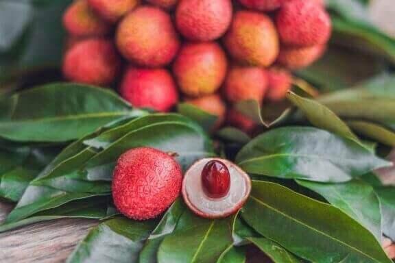 열대 식물 관리법 및 데코 법