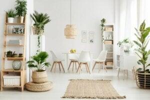 식물을 활용하여 집을 꾸미는 5가지 방법 01