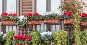식물을 활용하여 집을 꾸미는 5가지 방법 04