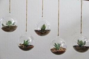 식물을 활용하여 집을 꾸미는 5가지 방법 03
