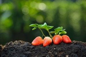 발코니 정원을 위한 필수적인 요소인 물
