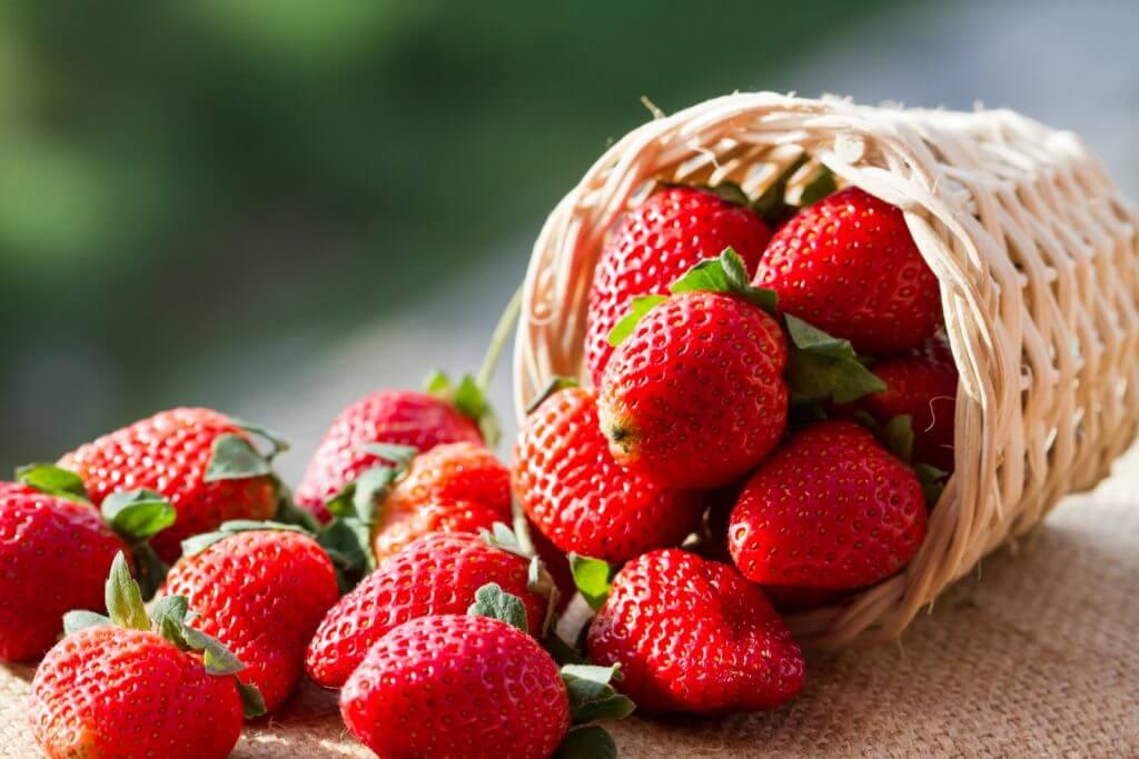 내 집 정원에서 직접 딸기 키우기