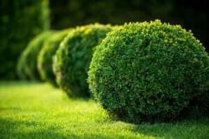 정원 식물 모양과 높이