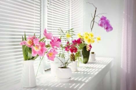 봄 장식 자원