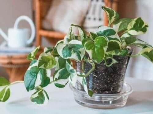 식물학 강의: 꼭 알아두어야 할 식물