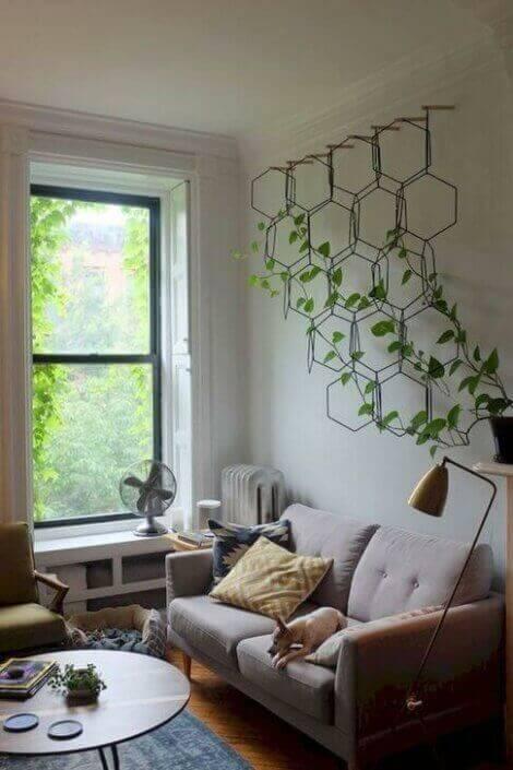 덩굴 식물 이미지