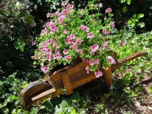 최고의 모기 퇴치용 식물