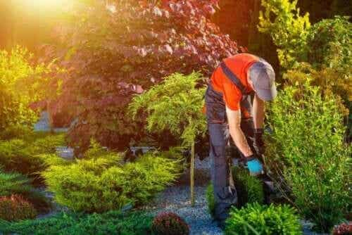여름을 위한 5가지 정원 준비 팁